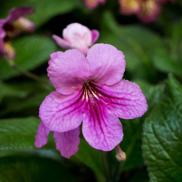 Blommande växter