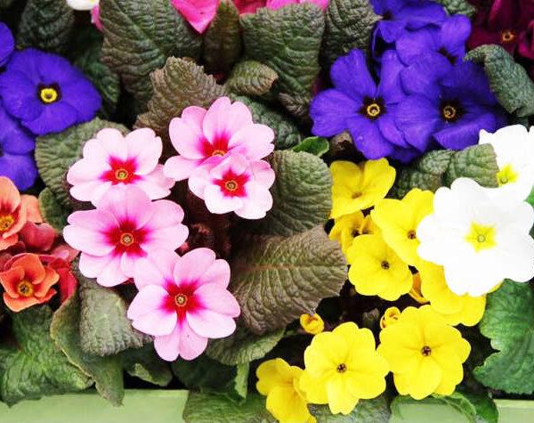 Blommande